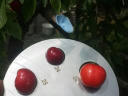 Овощи и Фрукты. - фото 2