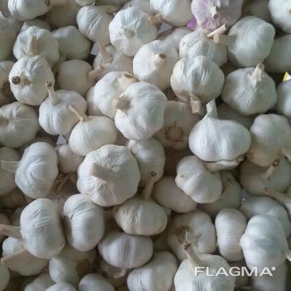 Garlic high quality