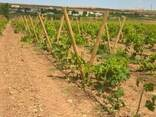 Колья оцилиндрованные, столбы виноградные, палисады - фото 4