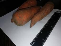 Vou vender cenouras por atacado Cazaquistão